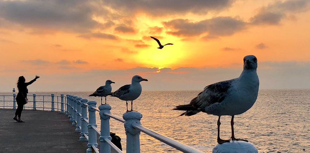 Seagulls perching on railing against sea during sunset