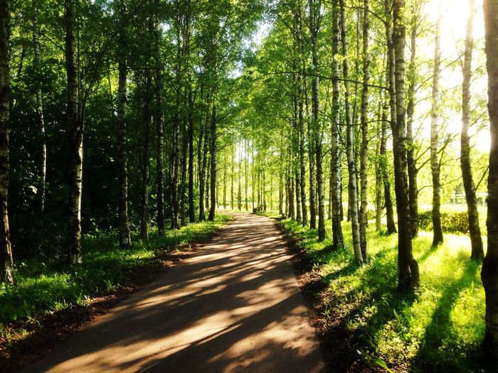 Tree Plant Forest Shadow Beauty In Nature Sunlight Tranquility Land Growth Nature Direction Green Color Scenics - Nature The Way Forward Tranquil Scene WoodLand Footpath Non-urban Scene No People Lush Foliage #FREIHEITBERLIN