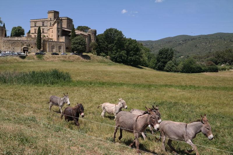 Blue Sky Castle Countryside Donkeys Green Lourmarin Provence