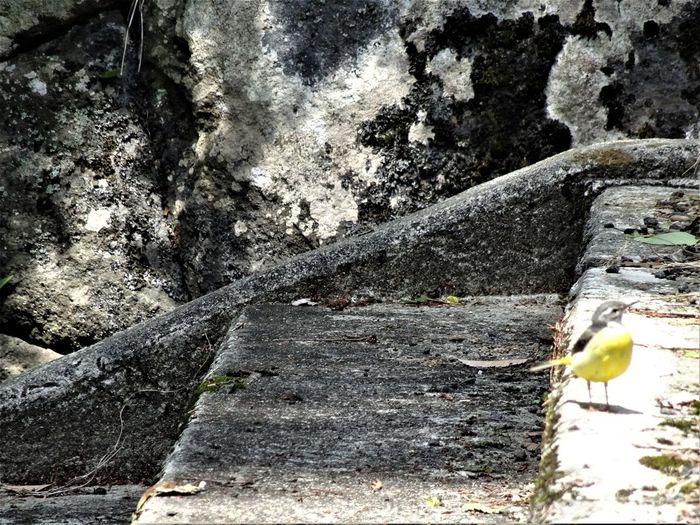 わらびおかいえろーばーど In The Sun Japan Steps Yellow Bird Bird Bird In The Sun Close-up Nature No People Yellow
