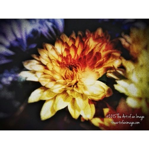 """Sun Drop"" May 2015 ☮ www.theartofanimage.com NY Longisland Southshore Eastend flowers floral art artist exploreliny artsy peaceful romantic meditation poetry instagood picoftheday bestoftheday picturesque colors theartofanimage"