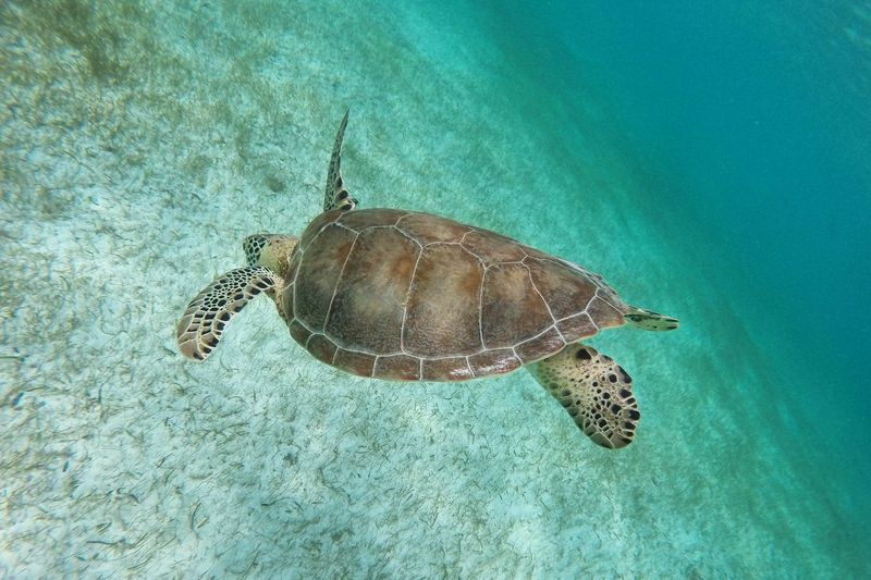 Animal Markings Animal Themes Animal Wildlife Beauty In Nature Blue Close-up Day Elevated View Natural Pattern Nature No People Outdoors Sea Life Tranquility Turtle Water Wildlife