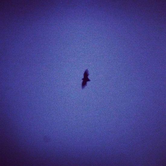 Just a random click!!!! Bat Batman Dccomics Wb awesome character best gothamites @historyofthebatman historyofthebatman night dark hdr fly cool photooftheday instagram_ahmedabad @instagram_ahmedabad @india_gram instagram_silvassa
