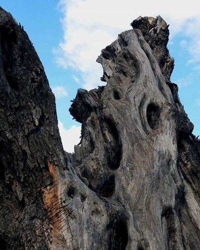 Composizione Nature Garden Compisition Tree Sicily Naxos Beautiful