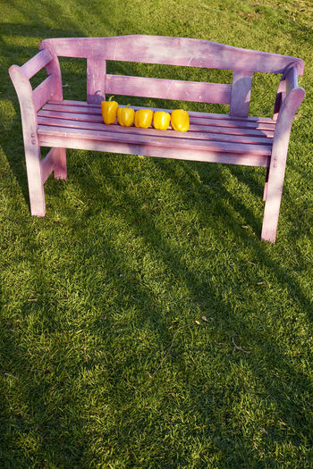 Absence Bench Day Empty Field Fruit Grass Green Color Growth Healthy Eating High Angle View Nature No People Outdoors Park Park - Man Made Space Park Bench Plant Seat Wellbeing Wood - Material
