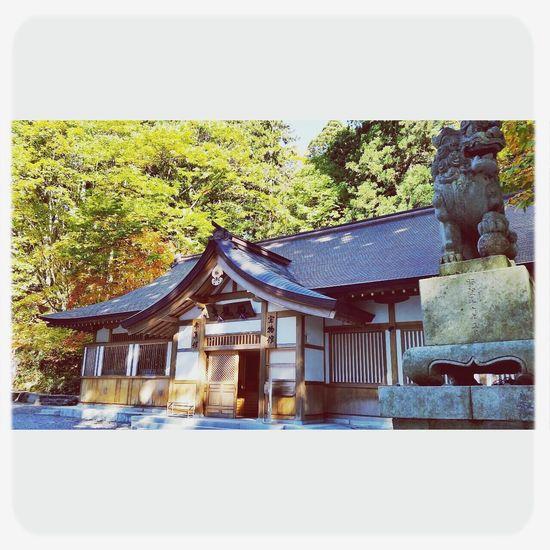 戸隠 Autumn Togakushi Shrine Nature