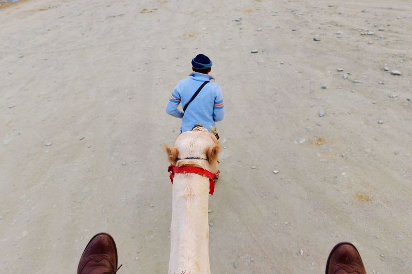 Now my turn!! Deceptively Simple Four Legs And A Tail From My Point Of View That's Me Camel Service Animals Going For A Ride