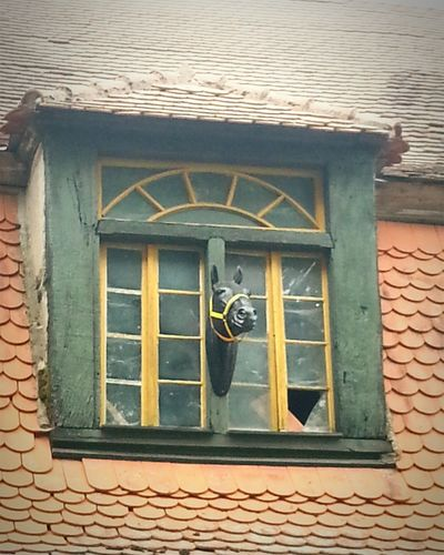 Looking Out Of The Window Horse FUNNY ANIMALS Walking Around Animal Photography Schloss Dennenlohe