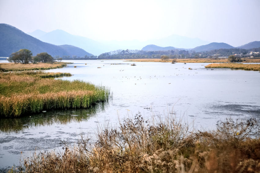 Autumn Calm Distant Gyungancheon Lake Lakeshore Majestic Outdoors Pond Reed Reflection Remote Rippled River Riverbank Riverside Scenics Standing Water Tranquil Scene Tranquility Water Waterfront Wetland