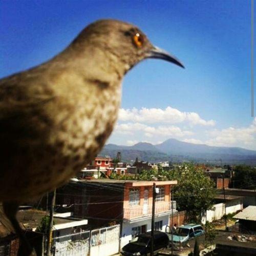 Nature_collection Birds Bluesky EyeEm Nature Lover Itsabeautifulworld Eyemphotography Enjoying Life