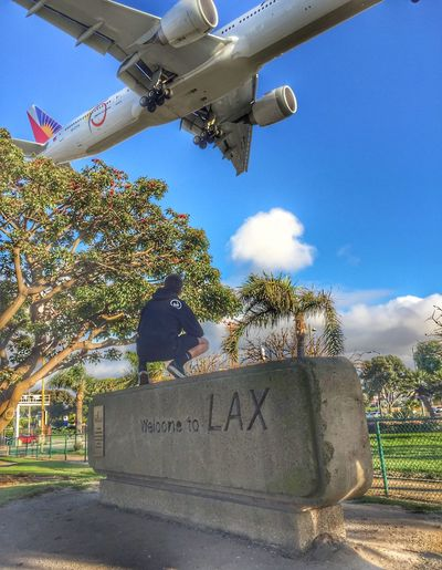 Planes landing at LAX international airport.... Tree Sky Sunlight Day Low Angle View Growth Outdoors Text No People Nature Plane Wing Clouds And Sky Travel Planes Aviation Photography Los Angeles International Airport LAX Live For The Story The Great Outdoors - 2017 EyeEm Awards