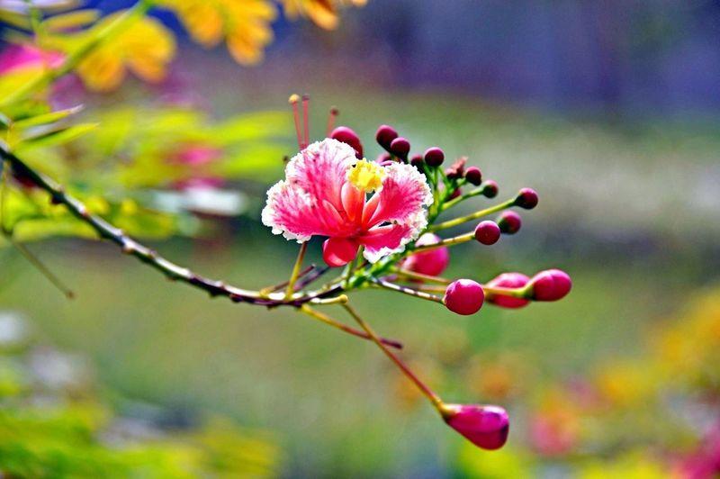 #flower#garden#macro#photography#nature#beauty#macronature