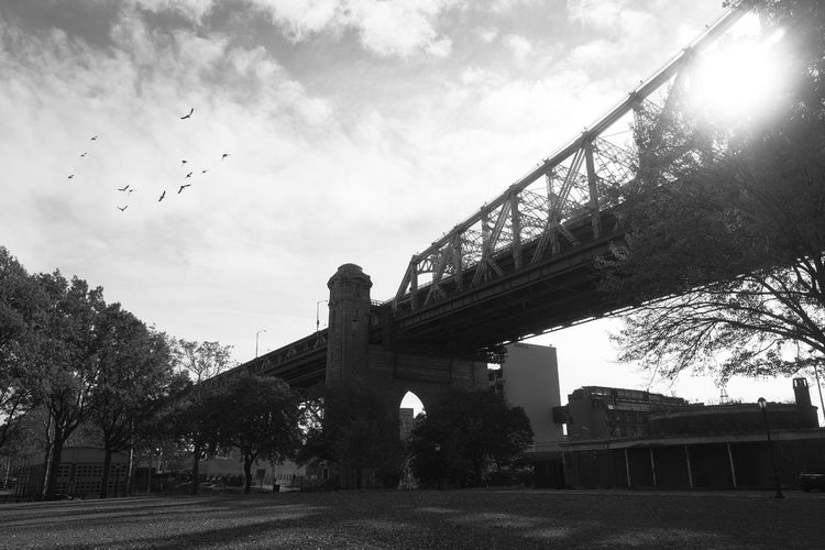 Bridge 59th Street Bridge Queenborough Sunlight Sunrise Birds Clouds And Sky Sky Sky And Clouds Bridge - Man Made Structure Architecture Low Angle View Tree City No People Transportation