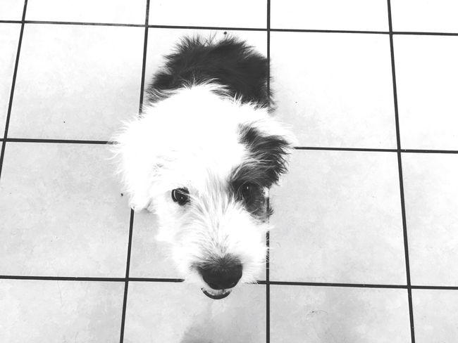 RÜFÜS the dog 👉🏼🐼 Dog Myfriend