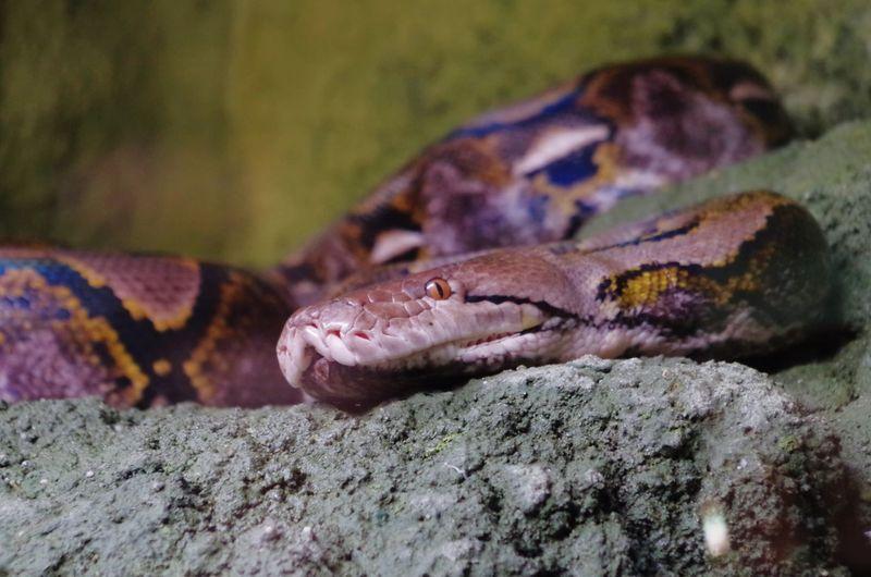 Close-up of alert snake