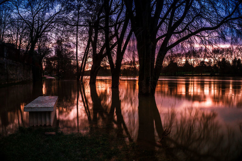 La Seine en crue. Mirror Reflections Cityscape Crue2018 Reflection Tree Water Beauty In Nature Nature No People Outdoors Sunset Scenics
