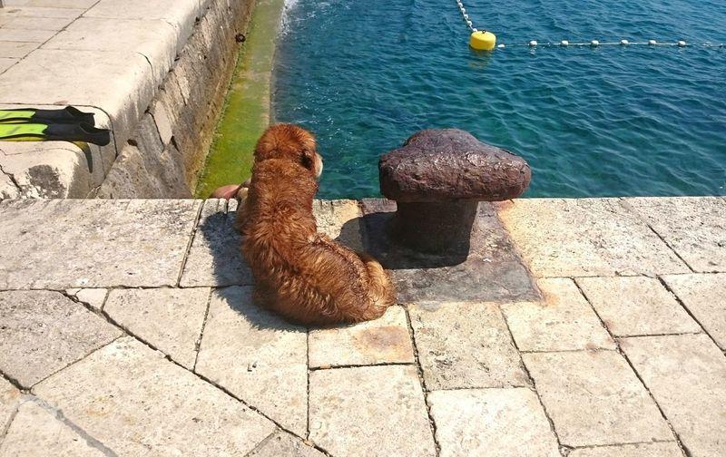Dog❤ Dog Life Dog Outdoors Sea Dog Pet Pets Corner Wet Dogs Wet Dog Summer Dogs Summer Dog