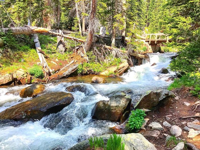A Rushing River Tree Nature Forest Rock - Object Scenics Outdoors Waterfall Water Beauty In Nature Landscape Tranquility Tranquil Scene Day No People Moss Travel Destinations Tree Trunk