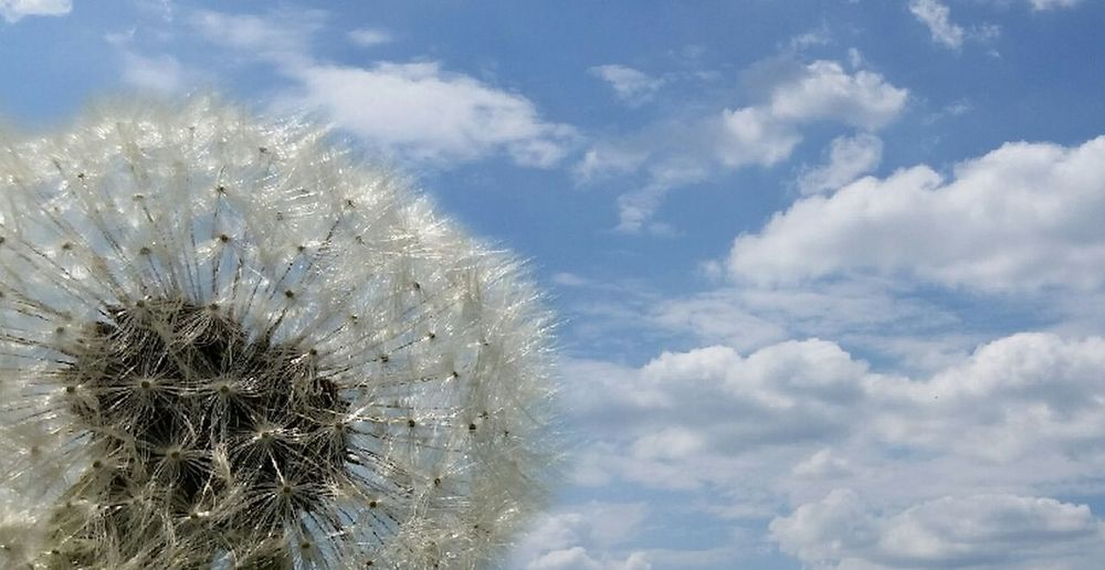 Nature Sky Growth Beauty In Nature Flower Cloud - Sky No People Outdoors Day Close-up Springtime Fragility Freshness Cactus Uncultivated Dandilion