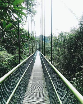 Nature Treetopwalk