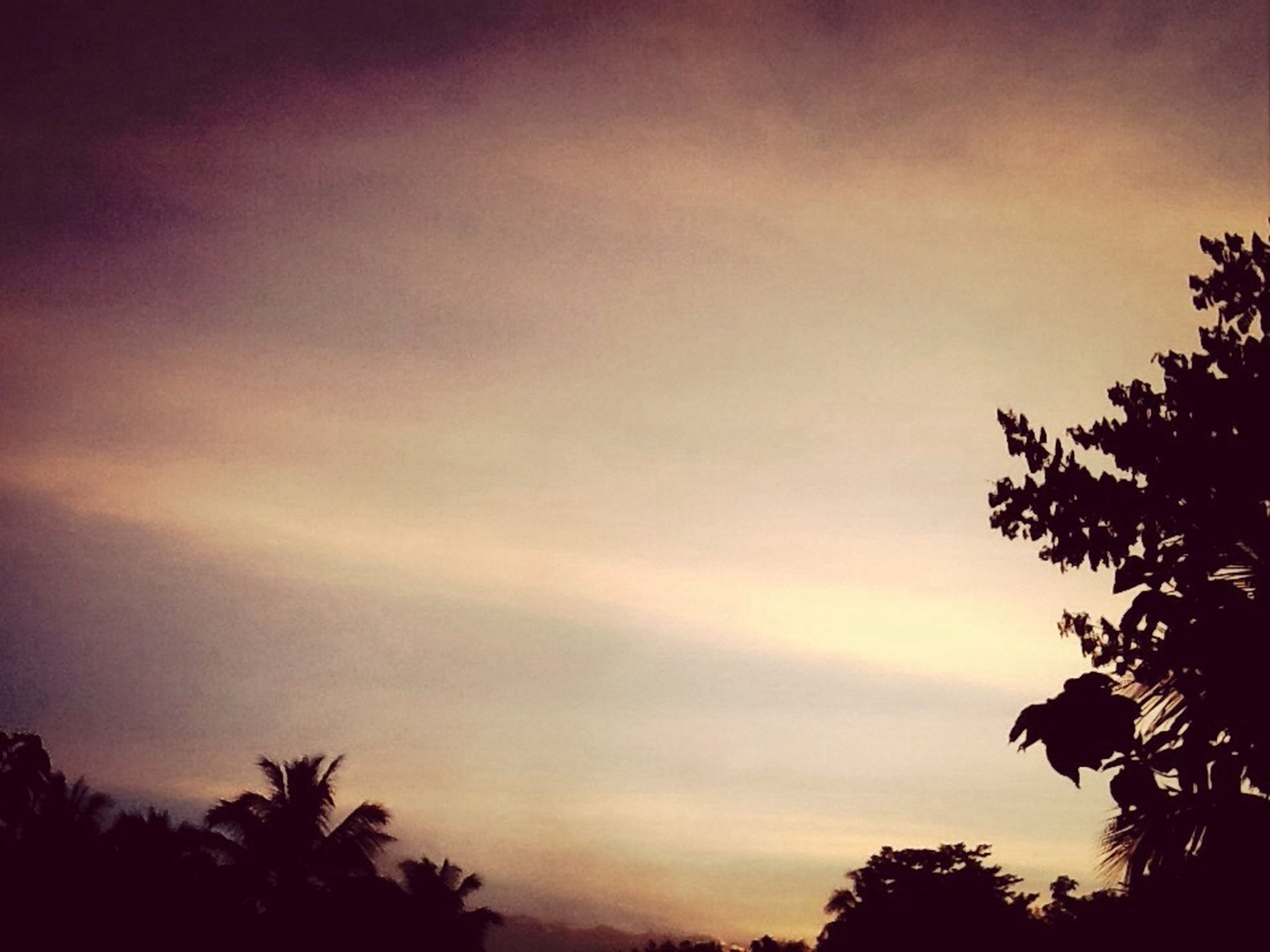 tree, silhouette, low angle view, sky, beauty in nature, palm tree, sunset, tranquility, nature, growth, scenics, tranquil scene, sun, treetop, no people, outdoors, cloud - sky, idyllic, branch, dusk