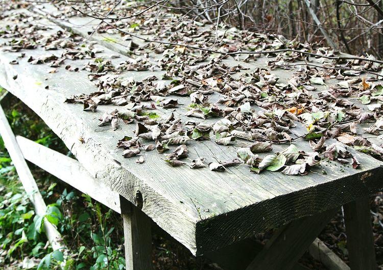 Table Autumn Leaves Estonia Eesti листья осень стол эстония Sad Sadneas Dry Dry Leaves Wind грусть сухие листья ветер Old старость старый