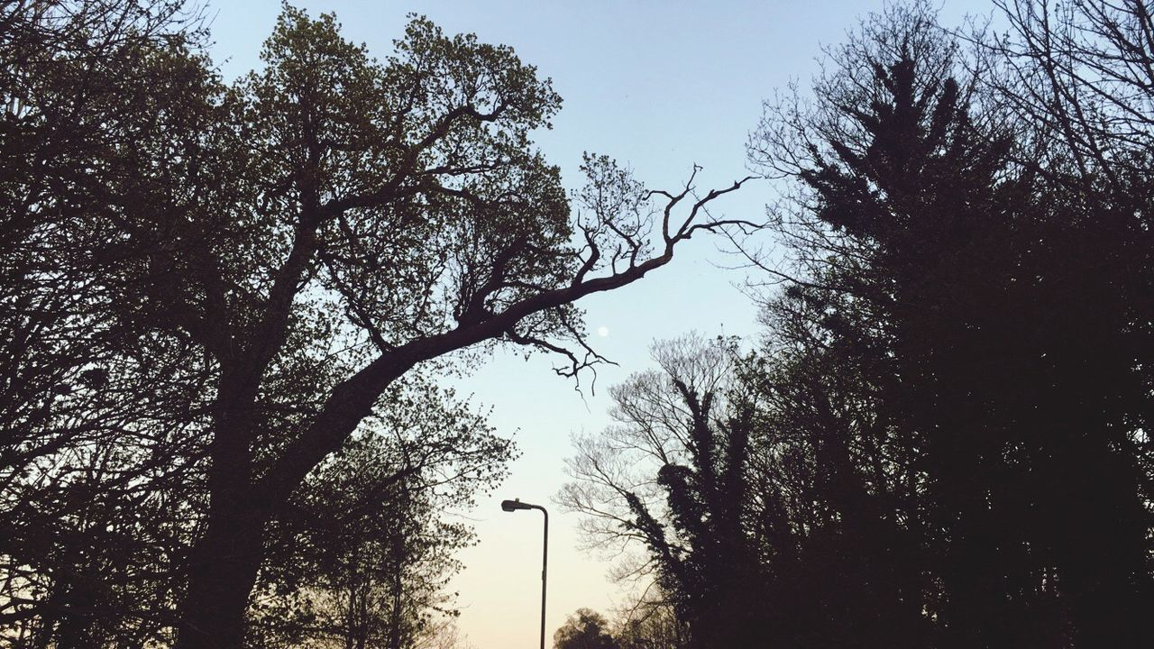 tree, low angle view, branch, nature, silhouette, day, sky, outdoors, no people, beauty in nature, growth, clear sky