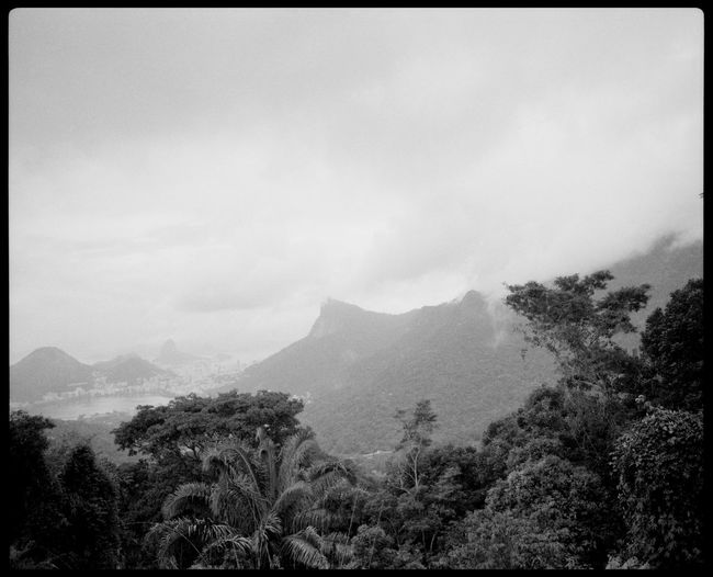 The Santa Marta Favela and Viewpoint of Rio de Janeiro Analogue Photography Atlantic Ocean Black And White Branches Brazil Cloudy Rio De Janeiro Favela Favela Houses Montains    Mountain Trees Nature No People Outdoors Plaubel Makina 67 Rio Bay Rio De Janeiro Rio Favela Rio Mountain Santa Marta South America Top Of Rio Trees Urban View From Above