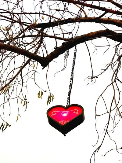 Heart Heart ❤ Heartbeat Moments Red Heart Shape Hanging Branch No People Bare Tree Tree Close-up Sky Outdoors Day Life Is Perfect Happiness Gratitude Clear Sky Tree Cloud - Sky Enjoying Life ♥ Hello World Road On The Road