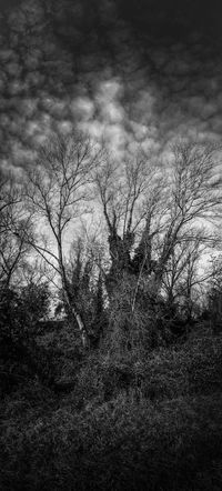 Walking Around Pordenone, Italy Mobile Photography Art Fineart Nature Photography Nature Textures Panoramic Views Bare Tree Branches Clouds And Sky Black And White Photography Pinhole Photography Stenopeic Camera Creepy Woods
