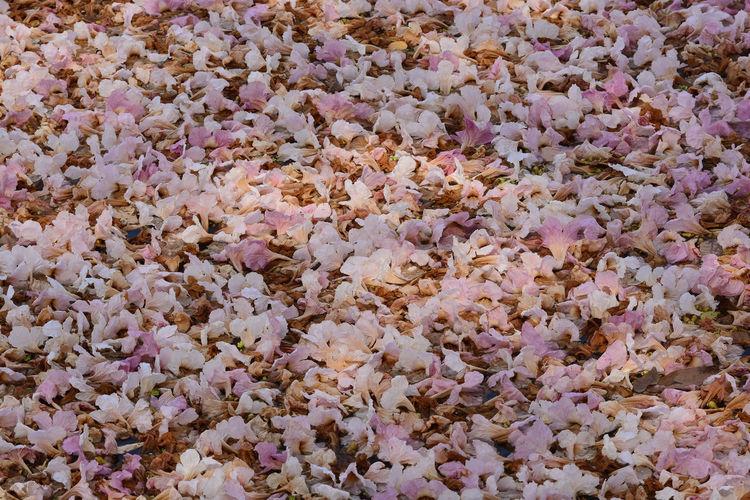 Full frame shot of pink flowering plants