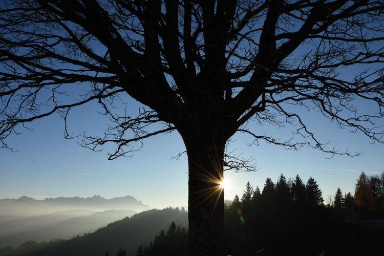 St.Anton Mountains Trees Sun
