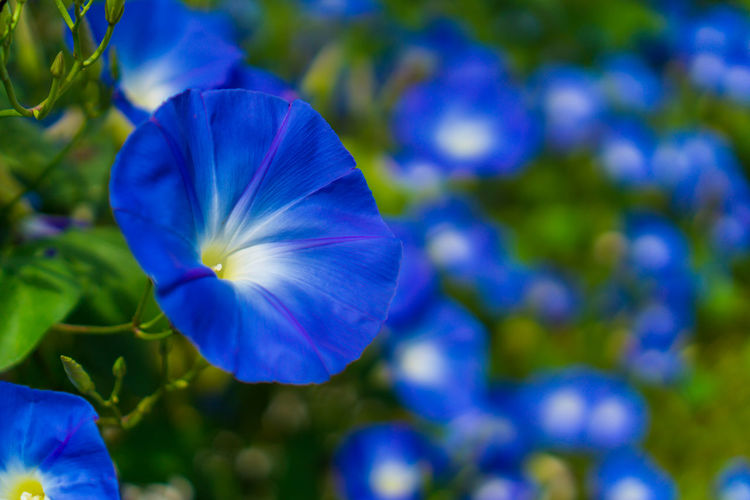 Flower Blue Petal Blossom Plant Flower Head Purple Beauty In Nature Nature Close-up Outdoors No People Springtime Freshness Day Fragility Nature Women Green Color Love ♥ Lovely Growth Beauty Sky