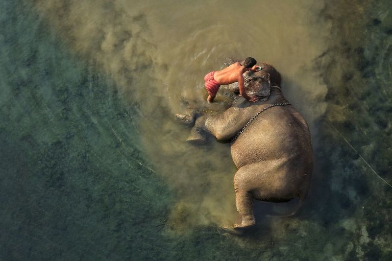 High angle view of elephant taking bath in water with human