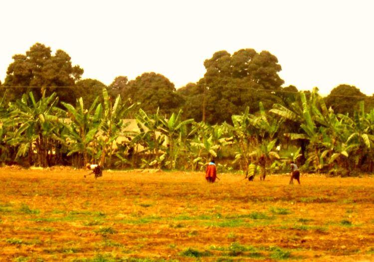 Benguela Angola Tropical Climate Plant