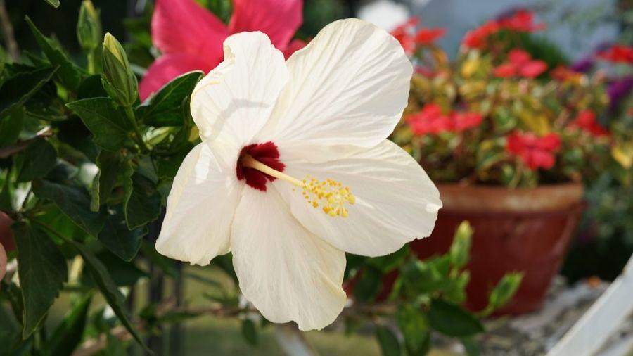 Flowering Plant Flower Plant Freshness Beauty In Nature Vulnerability  Fragility