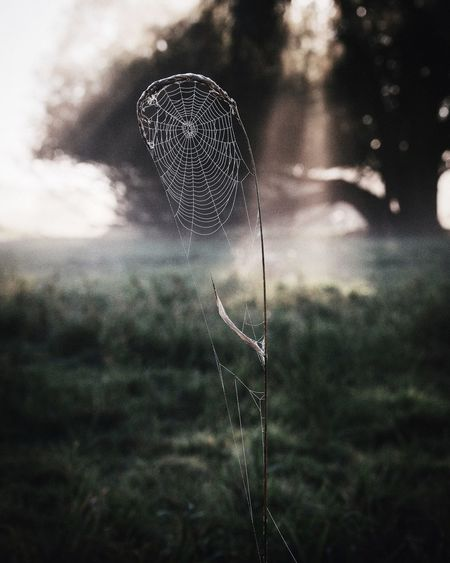 Autumn Morning EyeEm Best Shots Rural Landscape Vscocam Nature Cobweb Sunrise This Week On Eyeem