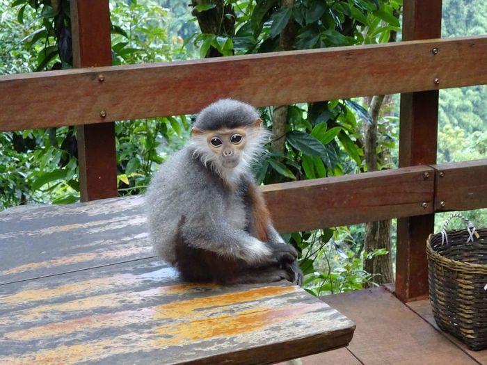 Playful monkey No Filter, No Edit, Just Photography Travel Travel Photography EyeEmNewHere Sitting Tail Close-up Tropical Rainforest Rainforest Monkey Animal Eye