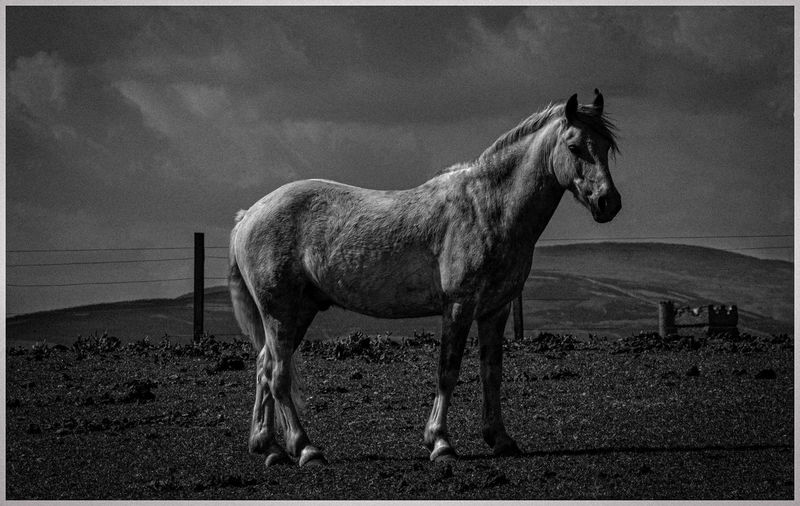 Horse standing in ranch against sky