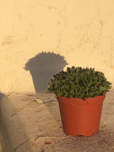 Cactus sunbath
