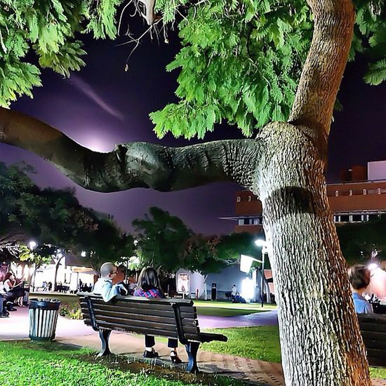 Israel College Academy Campus night tree couple man woman