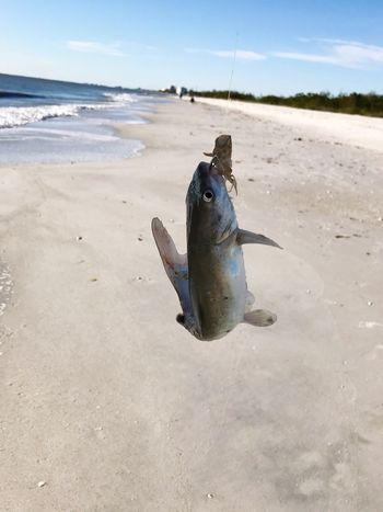 Fish Seafood Catch Of Fish Sea One Animal Day Water Beach Fishing