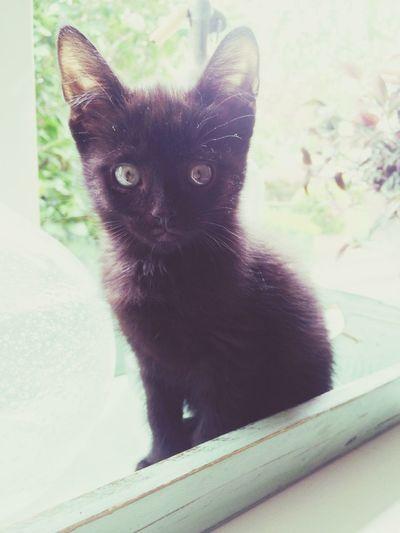 Pets Corner Bram Love Kitten