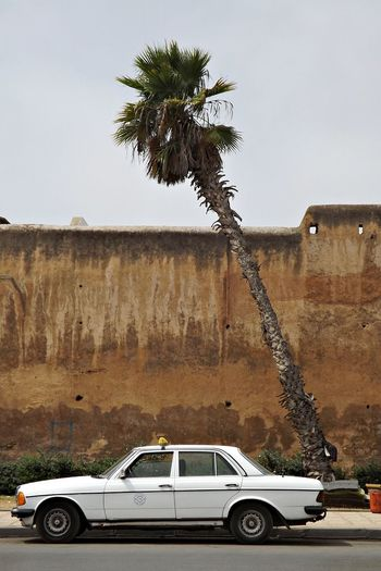 Avenue Taxi Architecture Building Exterior Built Structure Car Day Historique Land Vehicle Mode Of Transport Mur Nature No People Outdoors Palm Tree Palmier  Sky Station Taxi Stationnement Transportation Tree Voiture Ancienne Voiture Automobile