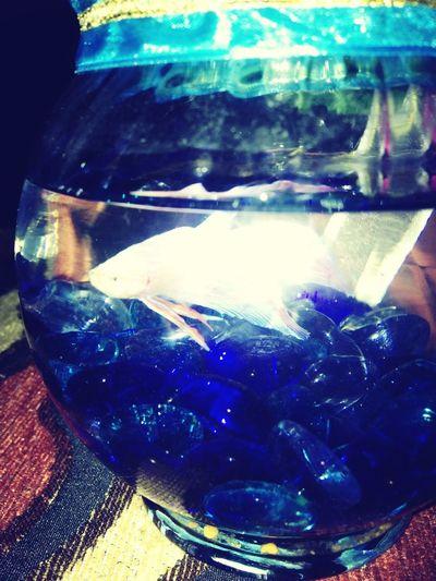 Fishy Fishay