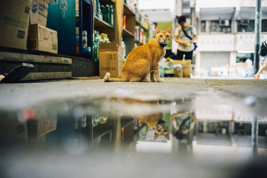 Built Structure Cat Lovers Cat Photography Cat Watching Cats Check This Out City City Life Close Up Focused Outdoors Reflection Reflection_collection Reflections Reflections In The Water Selective Focus Street Street Life Street Photography