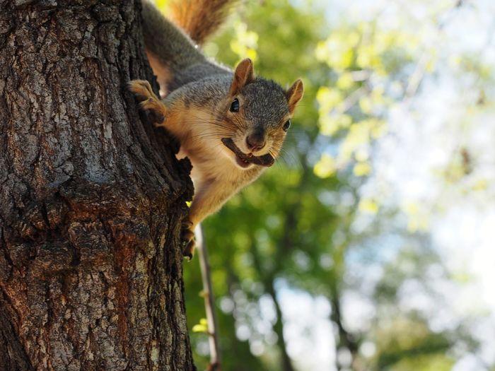 Squirrel Squirrel Closeup Leopard Tree Close-up Undomesticated Cat Chipmunk Rodent Animal Mouth
