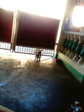 Playing With Sunlight Dog