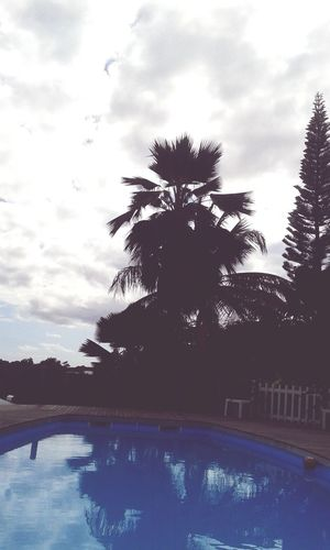 Au calme Relaxing Taking Photos Check This Out Enjoying Life Pool Blue Water Paysage Coconut Sky