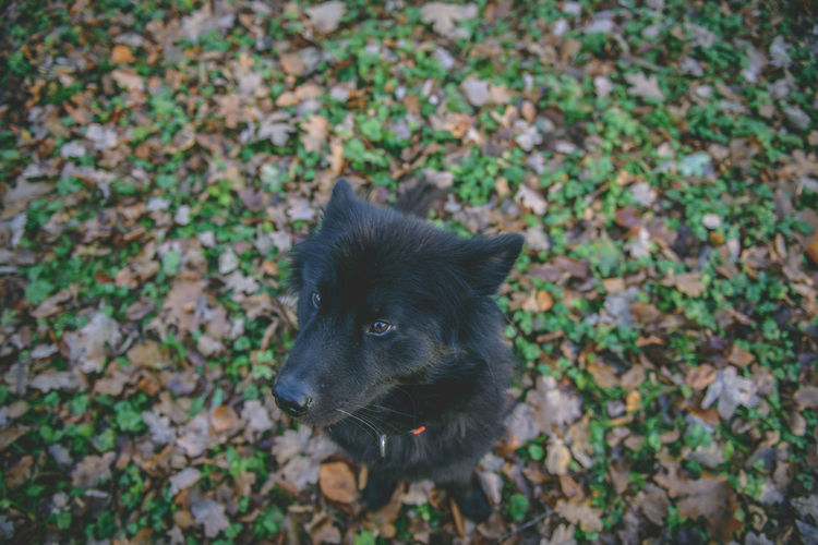 Autumn Black Dog Eurasier Mammal Mammals Nature Outdoors Outdoors Photograpghy  Sitting Dog Black Dog